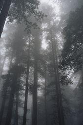 030803a redwoodfog.jpg