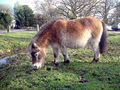 050103 2283 hants pony.jpg