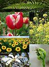Plants diversity.jpg
