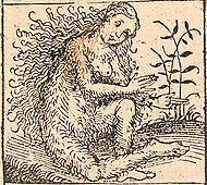 Nuremberg chronicles - Strange People - Hairy Lady (XIIv).jpg