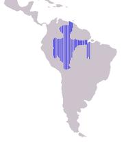 亞馬遜河豚分布范围