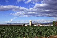 Corn production in Colorado.jpg