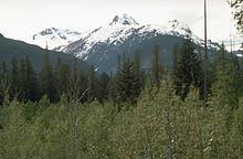 A glaciated mountain rising over trees.
