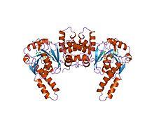 PDB 3had EBI.jpg