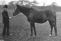 Amiable in 1903.jpg
