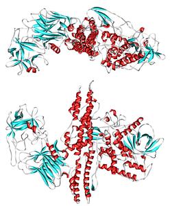 Botulinumtoxin Serotyp A (Clostridium botulinum)