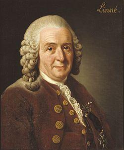 Carl Linné - portrét od Alexandera Roslina (1775).