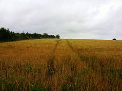 Spong Hill viewed from the south; to the left is a hedgerow that separates the hill from the adjacent road.