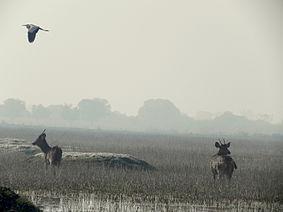 Keoladeo Ghana National Park, Bharatpur, Rajasthan, India