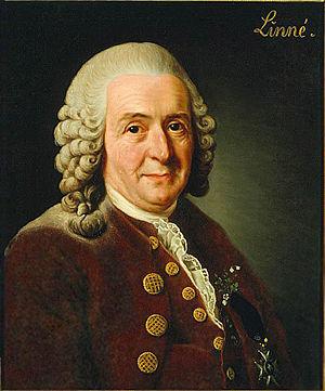 Carl von Linnés sterbliche Überreste wurden 1959 als Lectotypus ('nachträgliches Belegexemplar') der Art Homo sapiens ausgewiesen.