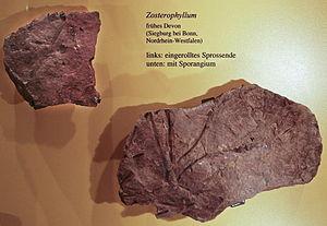 Fosilní Zosterophyllum