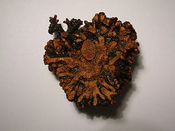 A sectioned alder root nodule