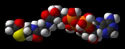 Acetyl-CoA-3D-vdW.png
