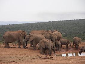 Addo Elephant National Park-001.jpg