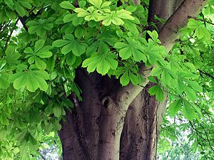 Leaves and trunk