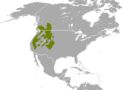 American Pika area.png