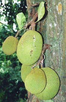 Fruits du jacquier