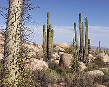 Baja California Desert.jpg
