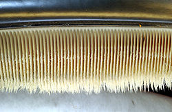 Photo displaying dozens of baleen plates. The plates face each other, and are evenly spaced at approximately 0.25 inches (1cm) intervals. The plates are attached to the jaw at the top, and have hairs at the bottom end.
