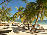 White sand beach lined with palm trees along a turquoise sea