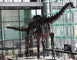 Squelette de Diplodocus carnegieiappartenant au Museum für Naturkunde.