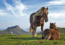 Two horses in a pasture, one is standing beside the other that is laying down.