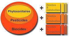Classification par grandes familles et sous-familles