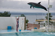 Profile photo of dolphin soaring over the outstretched arms of an aquarium entertainer