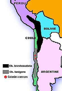 Carte d'Amérique du Sud avec deux bandes sur la côte ouest, successives mais juxtaposées au centre, et deux points rouges dans la bande inférieurs correspondant aux colonies de chinchillas lanigera restantes