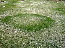 Photo de cercle herbeux