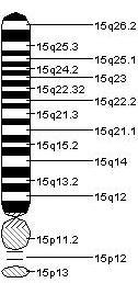 Chromosome 15.jpeg