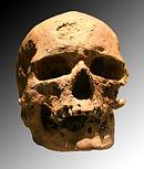 Crâne de l'un des individus découverts dans l'abri de Cro-Magnon (moulage)