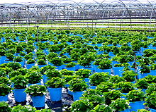 Cutchogue - Oregon Road - Plant Nursery.jpg
