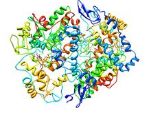 Cyclooxygenase-2.png