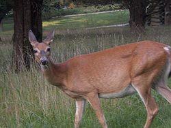 Deer Valley Forge.JPG