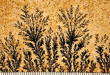 Dendrites01.jpg