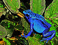 A blue frog with black spots sits on a green leaf.