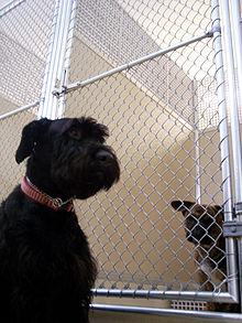 Dog kennel Mason.jpg