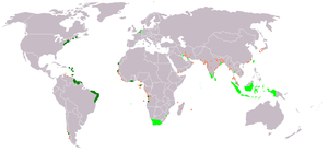 An anachronous map of the Dutch colonial Empire. Light green: territories administered by or originating from territories administered by the Dutch East India Company; dark green the Dutch West India Company.