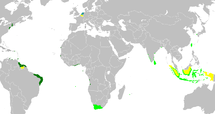 An anachronous map of the Dutch colonial Empire.  Light green: territories administered by or originating from territories administered by the Dutch East India Company; dark green: the Dutch West India Company.