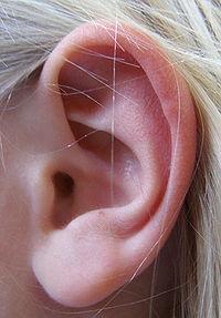 Photo d'une oreille humaine