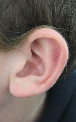 Earrr.JPG