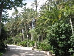 Elche - parque municipal1.jpg