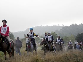 Endurance riding Uzes 2005 front.jpg