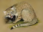 Felis silvestris lybica.png