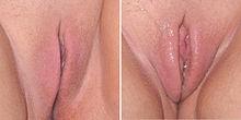 Female sexual arousal.JPG