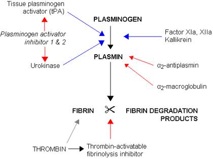 Fibrinolysis.png