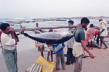 Two fishermen, carrying a large fish