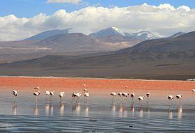 Flamingos en la Laguna Colorada, Uyuni, Bolivia.jpg