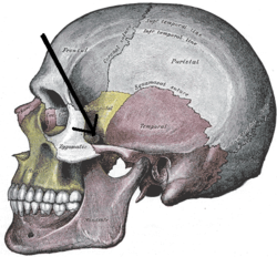 Gray188-Sphenozygomatic suture.png
